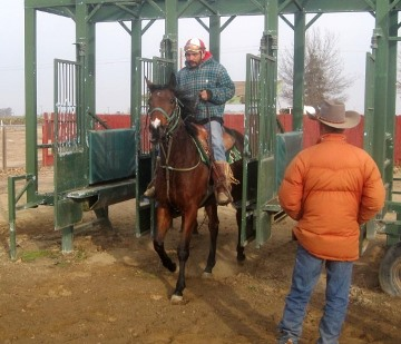 Green Valley Training Center starting gate with She's a Charmer