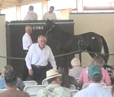 CTBA Auction at Pleasanton